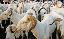 Gagner un mouton à la loterie, les précisions d'Oustaz Alioune Sall