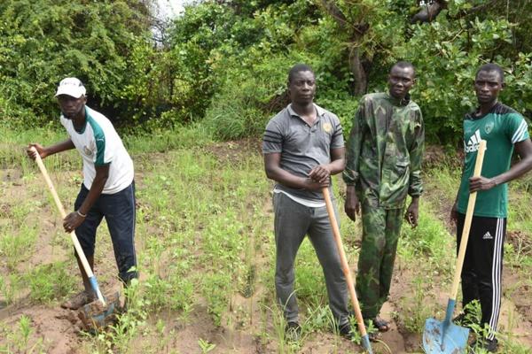 Djimbéring : Plus de 6000 plants de Filao reboisés par les jeunes pour lutter contre...