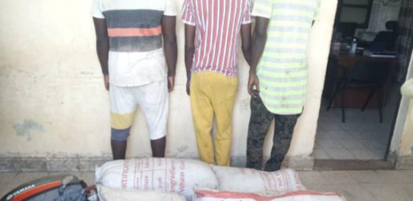 Joal : 3 trafiquants tombent avec 84 kg de chanvre indien