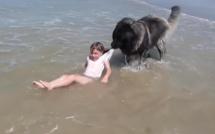 Normandie: Un chien sauve une fillette de la noyade