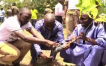 Bignona : Journée de l'arbre Mamina KAMARA s'engage et lance un appel aux élus locaux