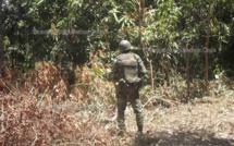 Bignona : Des agents eaux et forêts attaqués..., un civile tué